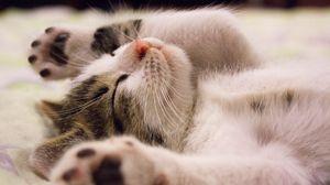 Превью обои котенок, лежит, малыш, сон
