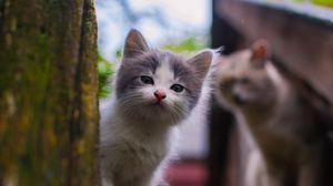 Превью обои котенок, взгляд, уличный, пятнистый