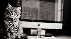 Превью обои котёнок, компьютер, клавиатура, чб