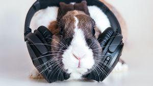 Превью обои кролик, наушники, музыка, аудио
