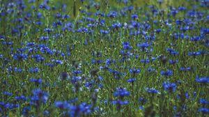 Превью обои лаванда, полевые цветы, цветы, поляна, цветение, трава