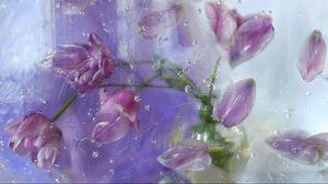 Превью обои лепестки, растение, цветы