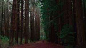 Превью обои лес, человек, одиночество, деревья