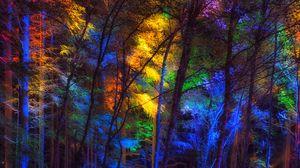 Превью обои лес, деревья, разноцветный, свет