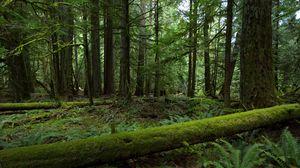 Превью обои лес, деревья, природа