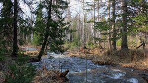Превью обои лес, деревья, река, течение, пейзаж