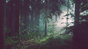 Превью обои лес, деревья, туман
