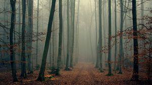 Превью обои лес, деревья, туман, листва, осень, прохлада