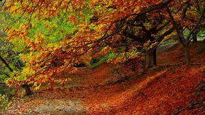 Превью обои лес, осень, листва, деревья