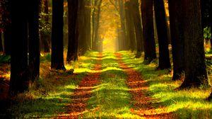 Превью обои лес, осень, тропинка, туман