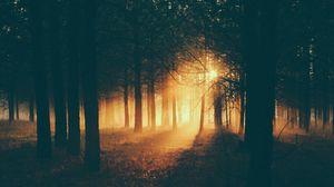 Превью обои лес, солнечный свет, туман, темный, сумерки