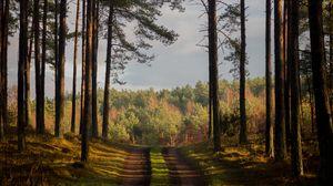 Превью обои лес, тропинка, лето, деревья, дания