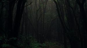 Превью обои лес, туман, деревья, ветки, осень, темный, мрачный
