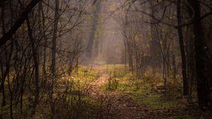 Превью обои лес, туман, деревья, ветки, тропинка