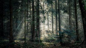 Превью обои лес, туман, деревья, ветки, свет