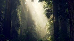 Превью обои лес, туман, солнечный свет, деревья