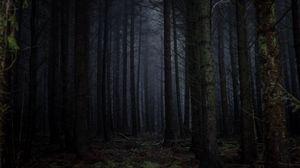 Превью обои лес, туман, темный, деревья, мрачный