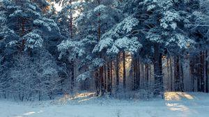 Превью обои лес, зима, снег, деревья, зимний пейзаж
