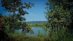 Превью обои лето, листья, деревья, природа