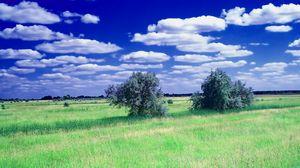 Превью обои лето, поле, трава, деревья, облака, небо