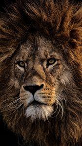 Превью обои лев, грива, хищник, царь зверей, морда