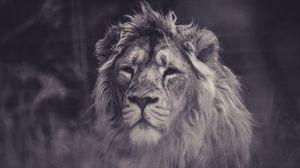 Превью обои лев, хищник, грива, взгляд, чб