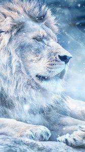 Превью обои лев, снег, большая кошка, царь зверей