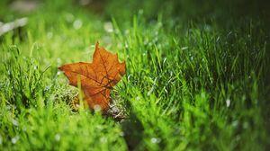 Превью обои лист, осень, клен, трава, размытость
