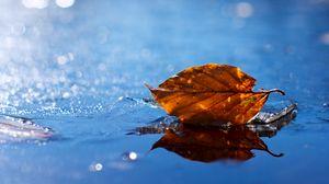 Превью обои лист, осень, опавший, сухой, вода, жидкость