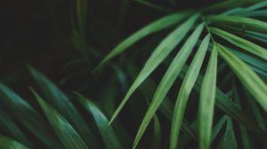 Превью обои листья, пальма, растение, зеленый, макро