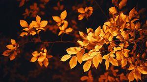Превью обои листья, ветка, осень, размытость, листва