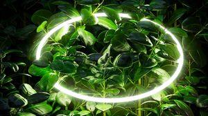 Превью обои листья, ветки, неон, круг, свечение