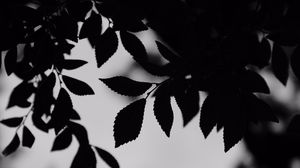 Превью обои чб, листья, ветки, очертания