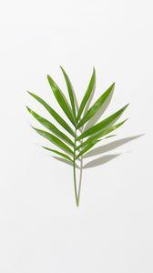 Превью обои листок, ветка, зеленый, минимализм