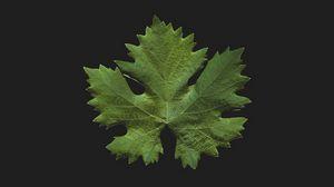 Превью обои листок, зеленый, минимализм, крупный план