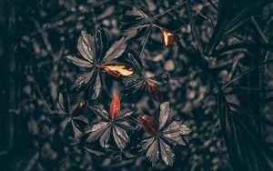 Превью обои листья, растение, капли, черный
