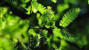 Превью обои листья, ветки, иголки, тень
