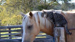 Превью обои лошадь, конь, кот, кошка, дружба