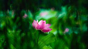 Превью обои лотос, листья, цветение, размытость