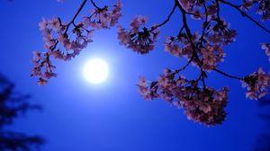 Превью обои луна, цветы, цветение