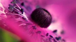Превью обои макро, цветок, лепестки, сиреневый