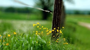Превью обои макро, забор, трава