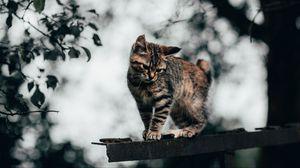 Превью обои кот, котенок, забавный, милый
