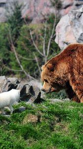 Превью обои медведь, гризли, песец, трава, камни