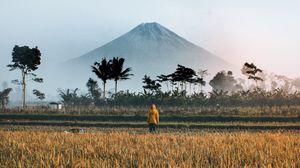 Превью обои одиночество, уединение, поле, гора, пальмы, индонезия