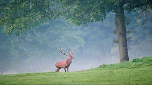 Превью обои олень, деревья, трава, прогулка, туман