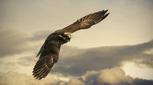Превью обои орел, полет, небо, крылья, облака