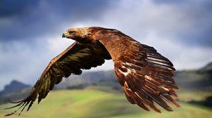 Превью обои орел, полет, небо, птица, хищник