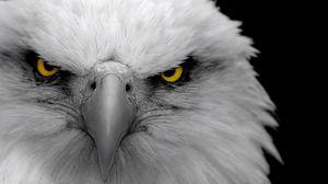 Превью обои орел, птица, хищник, клюв