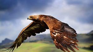 Превью обои орел, птица, хищник, полет, крылья, взмах